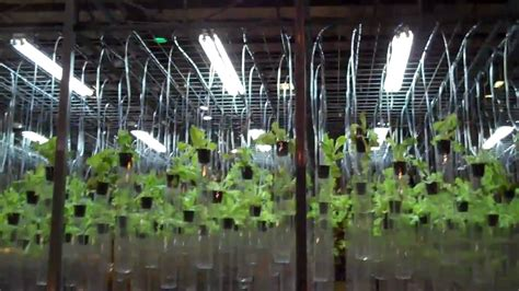 Hydroponic Lettuce Production by Plant Lab - University of