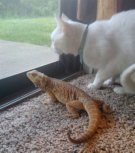 Cute! See The Incredible Friendship Between Cat And The