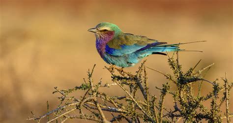 Birds of South Africa